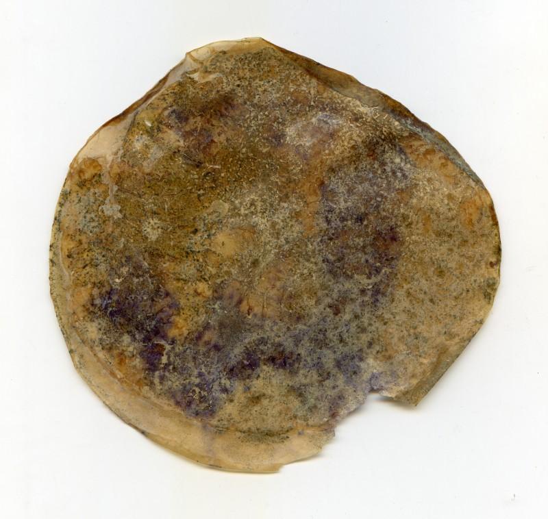 Zoogleia