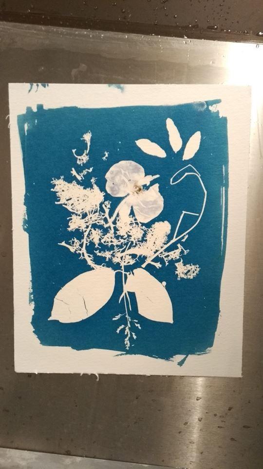 cyanotype & rayogramme